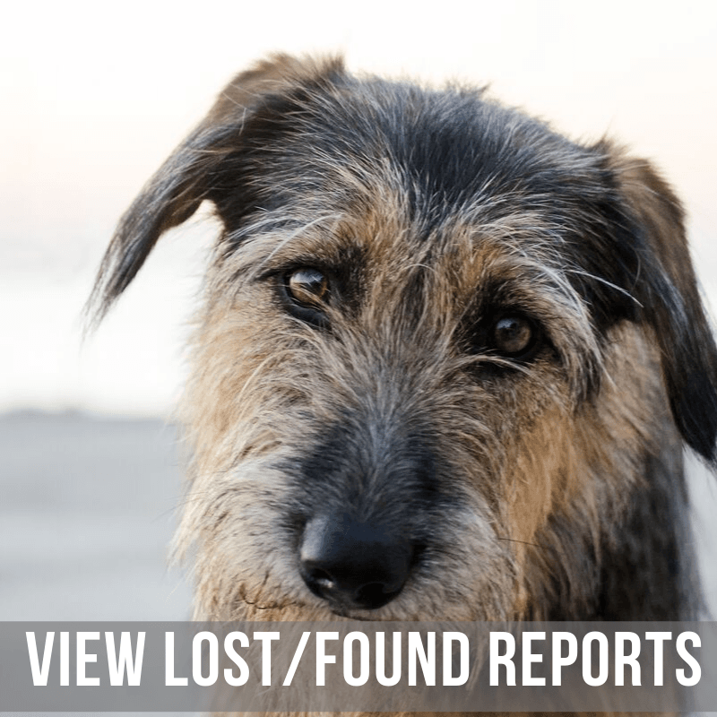 View Lost and Found Pets