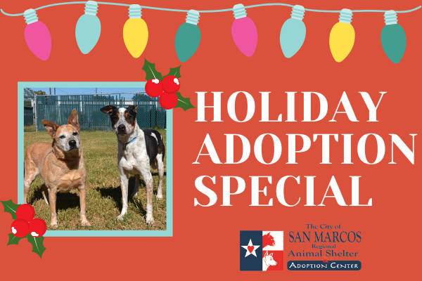Holiday Animal Shelter Adoption Special
