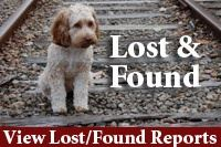 Lost and Found: View lost and found reports.