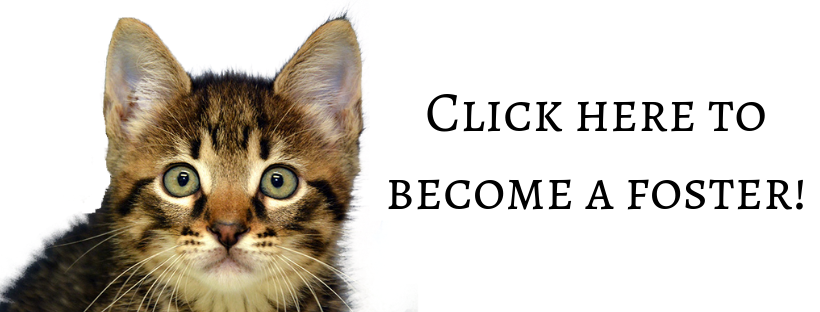 Click here to become a foster