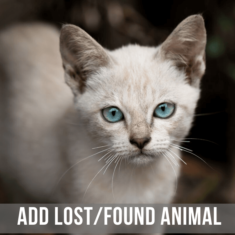 Add Lost and Found Animal